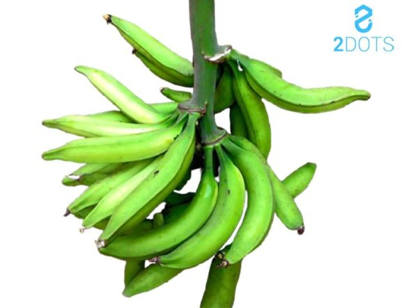 5 Reasons to plant and eat plantains